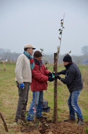 Taille des arbres fruitiers à Grand-Leez