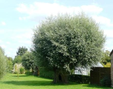 arbre large